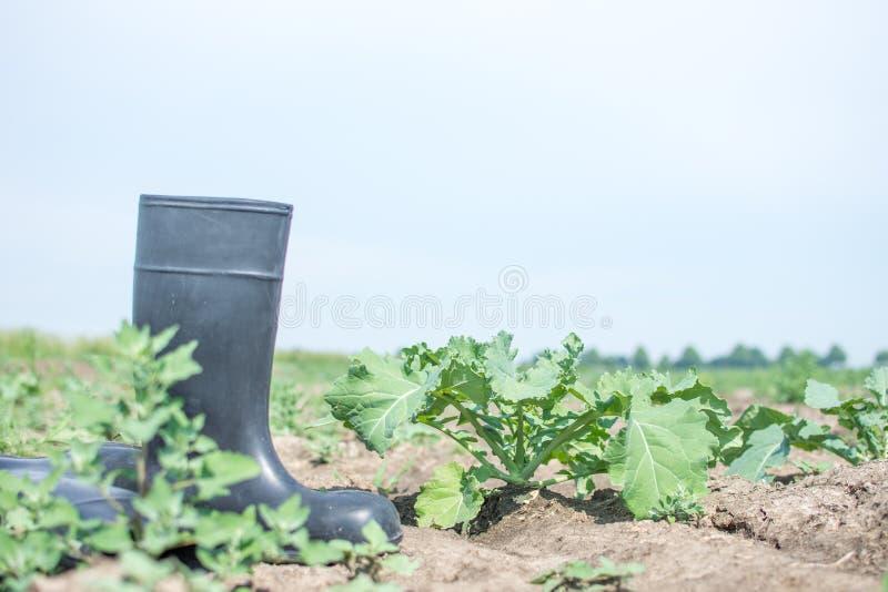Verduras en un campo con las botas de goma fotos de archivo