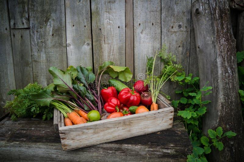 Verduras en una caja fotos de archivo libres de regalías