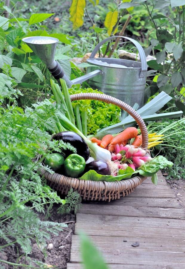 verduras en una cesta de mimbre en un huerto fotografía de archivo