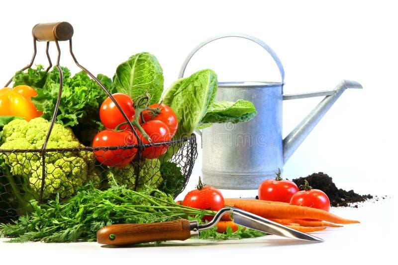 Verduras frescas con la poder de riego foto de archivo