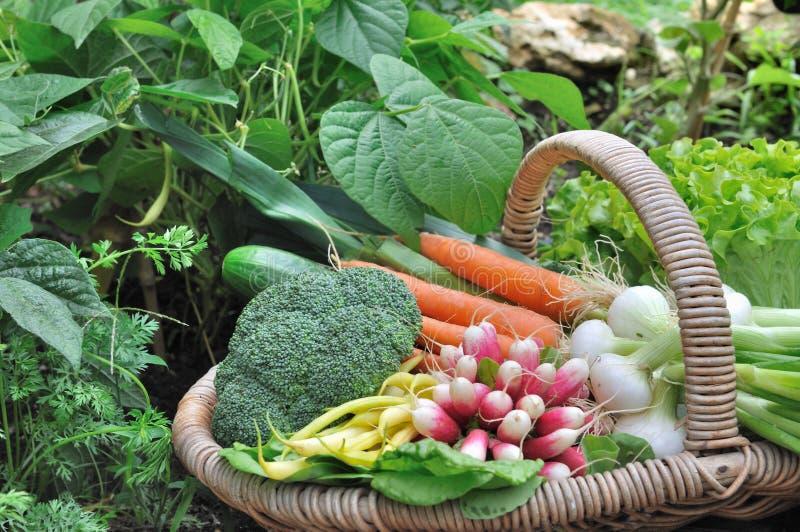 Verduras frescas cosechadas foto de archivo libre de regalías