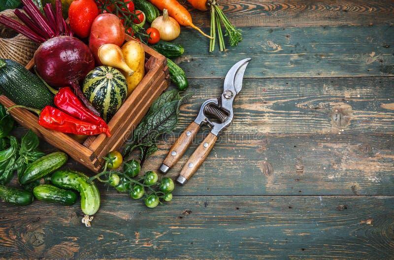 Verduras frescas de la cosecha en el viejo tablero de madera fotos de archivo