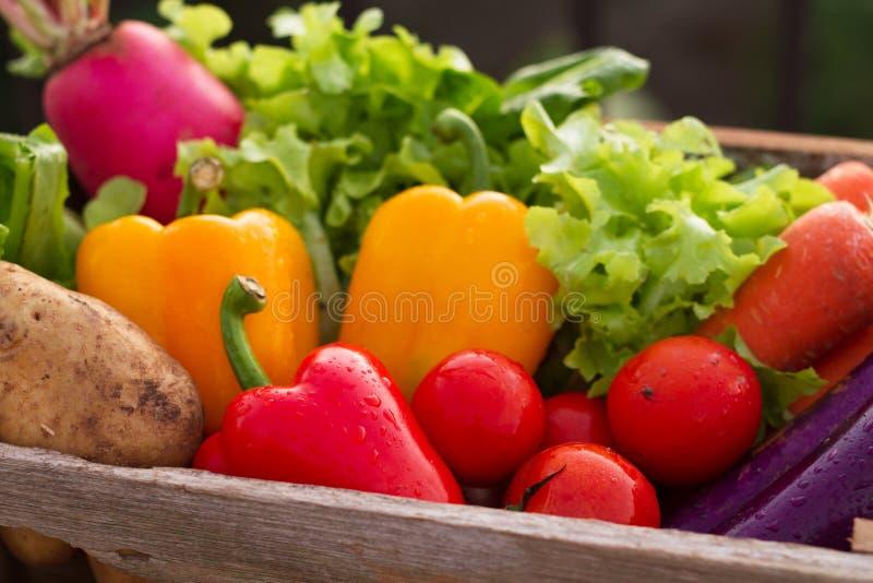 Verduras frescas en el cajón de madera foto de archivo