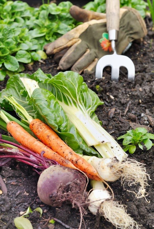 Verduras frescas en jardín fotografía de archivo