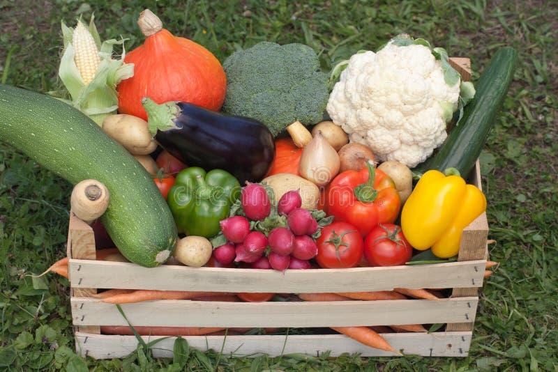 Verduras frescas en un rectángulo de madera fotografía de archivo libre de regalías