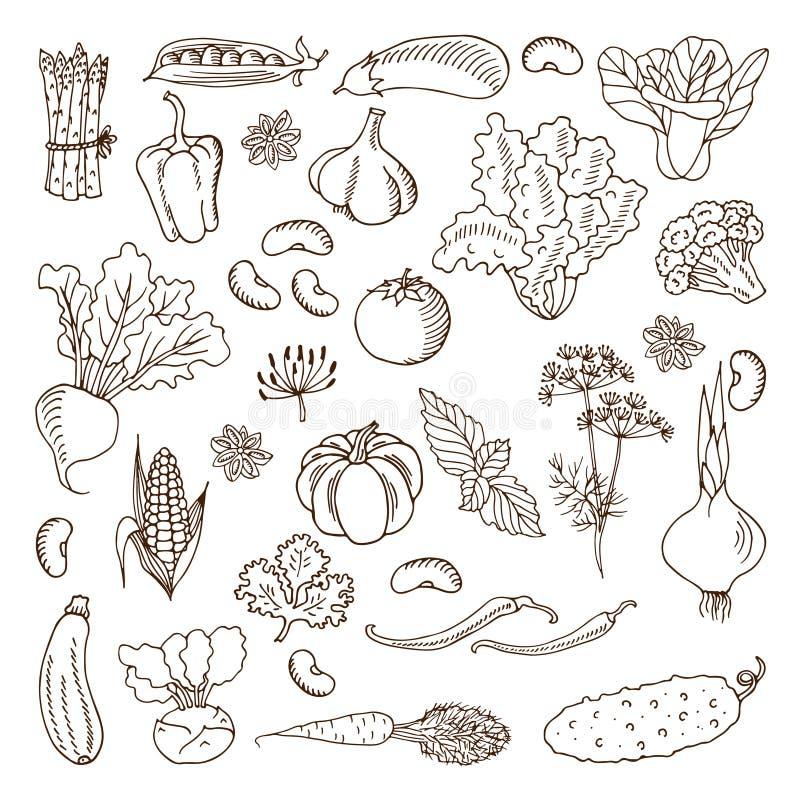 Verduras Ilustración del vector Elementos del diseño ilustración del vector