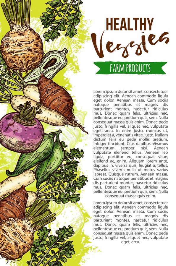 Verduras naturales exóticas, bandera del bosquejo del vector stock de ilustración