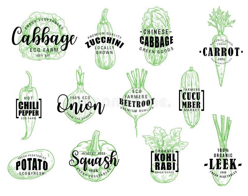 Verduras naturales orgánicas, letras del vector stock de ilustración