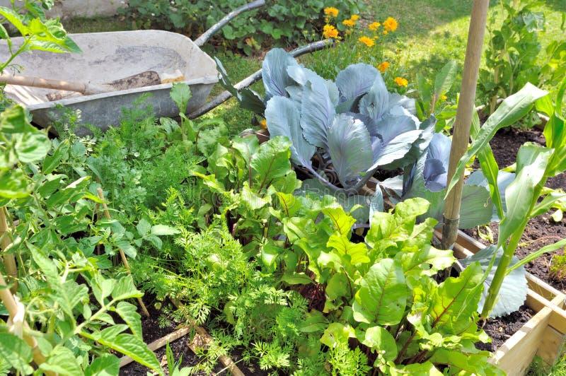 Verduras orgánicas en remiendo imagen de archivo