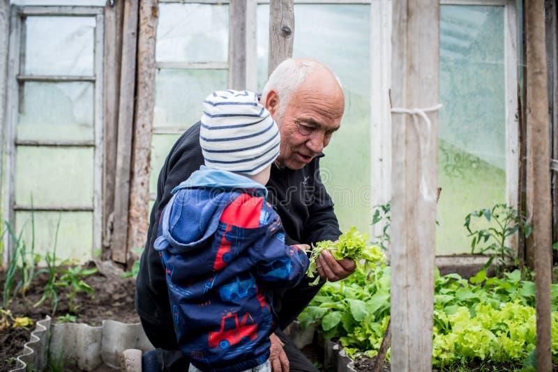Verduras que muestran de abuelo a su niño imagen de archivo libre de regalías