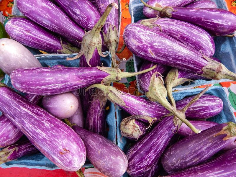 Verduras rayadas púrpuras de la berenjena de la pintada en el mercado foto de archivo libre de regalías