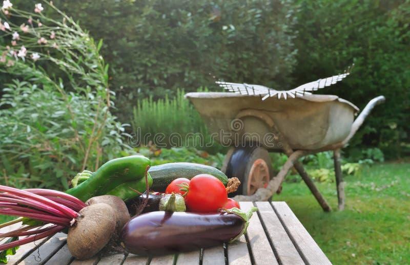 Verduras recién cosechadas imagen de archivo libre de regalías