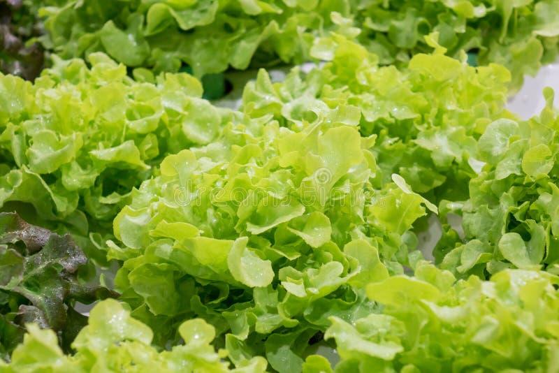 Verduras sanas vegetales orgánicas imágenes de archivo libres de regalías