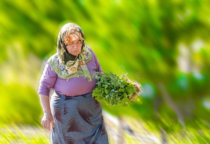 Verduras sanas y localmente producidas el llevar de la mujer en un campo verde en Turquía fotos de archivo