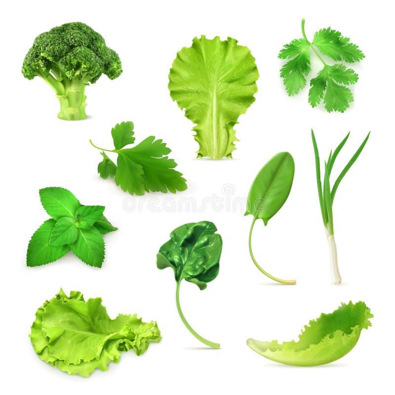 Verduras verdes e hierbas fijadas stock de ilustración