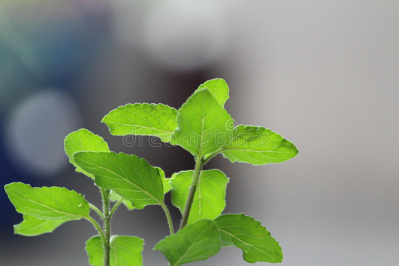 verdure images libres de droits