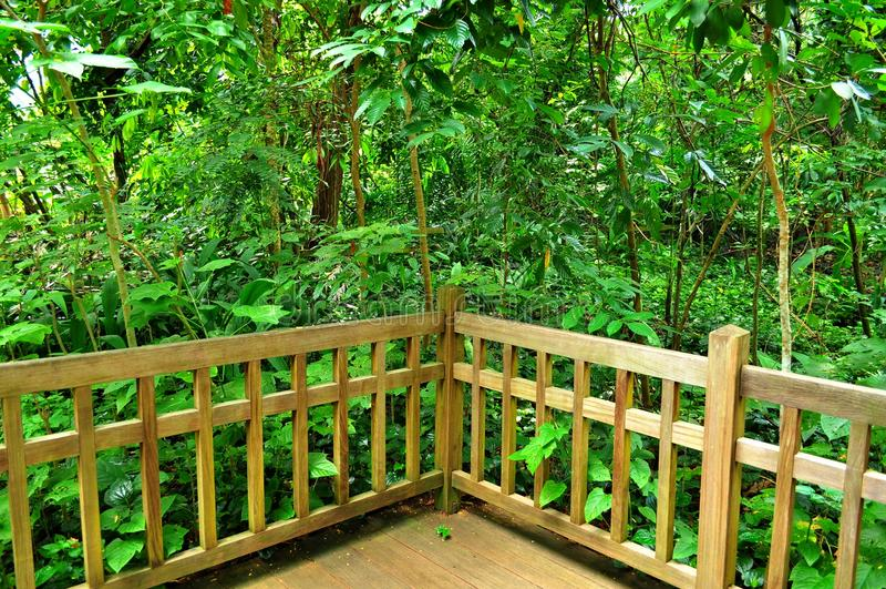 Verdure abondante derrière la frontière de sécurité en bois images stock