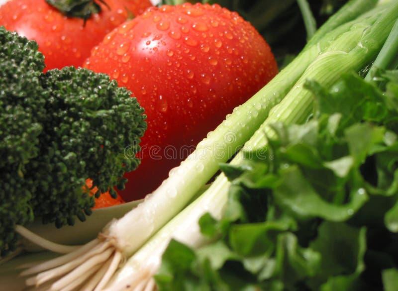 Verdure bagnate fresche fotografia stock