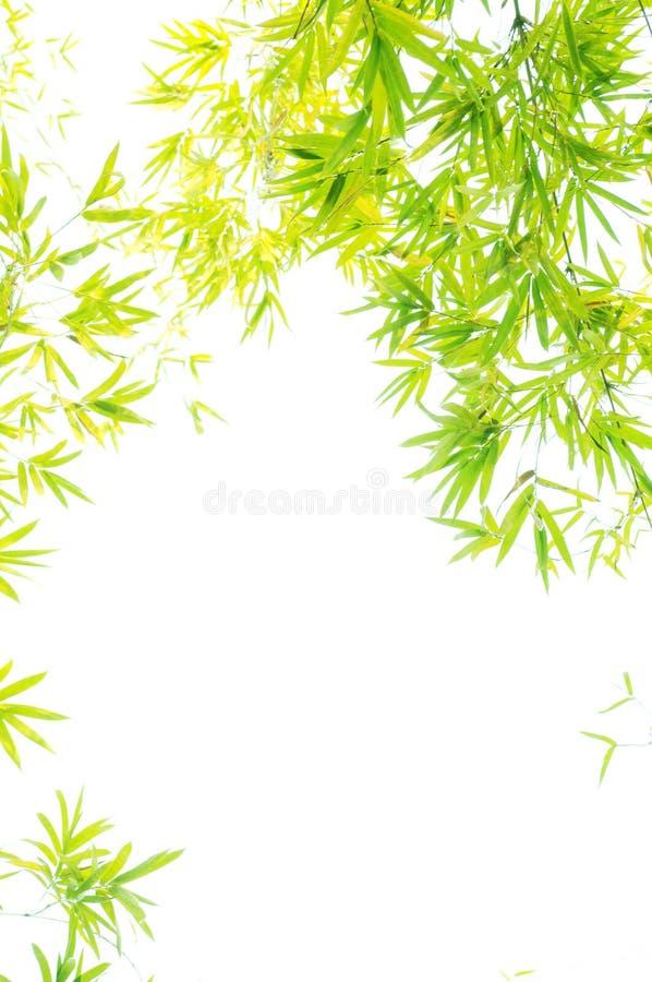 The verdure bamboo foliage royalty free stock photos