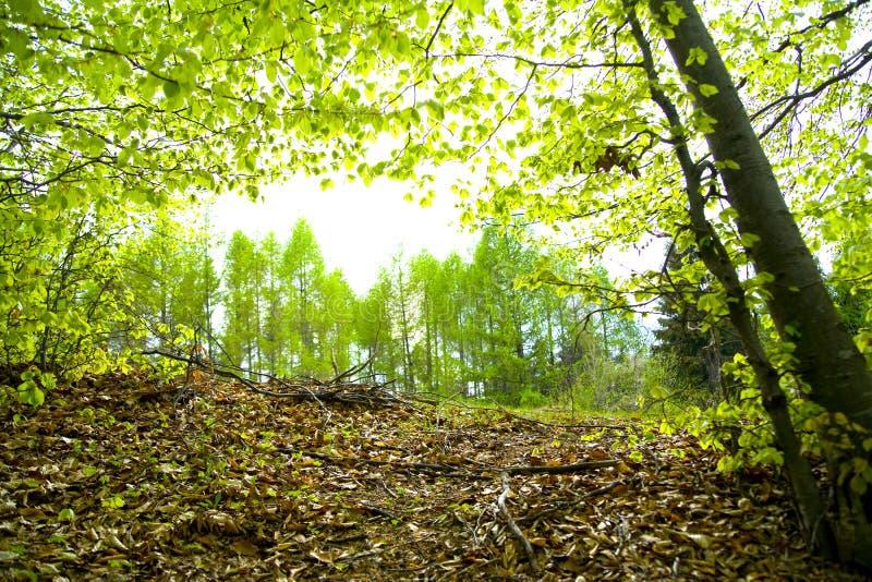 Verdure de forêt photographie stock