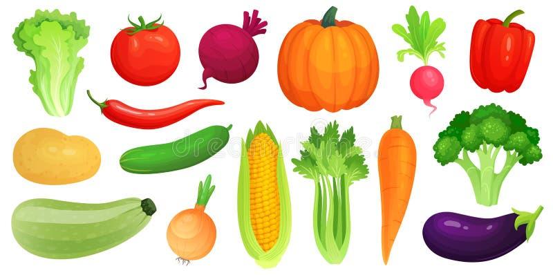 Verdure del fumetto Verdure fresche del vegano, zucchini verde di verdure crudo e sedano Vettore della lattuga, del pomodoro e de royalty illustrazione gratis