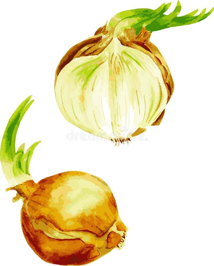 Verdure dell'acquerello Imposti le cipolle Tagli la cipolla royalty illustrazione gratis