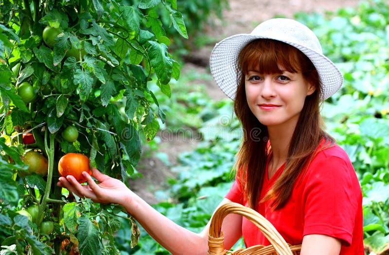 Verdure di raccolto della donna immagine stock libera da diritti