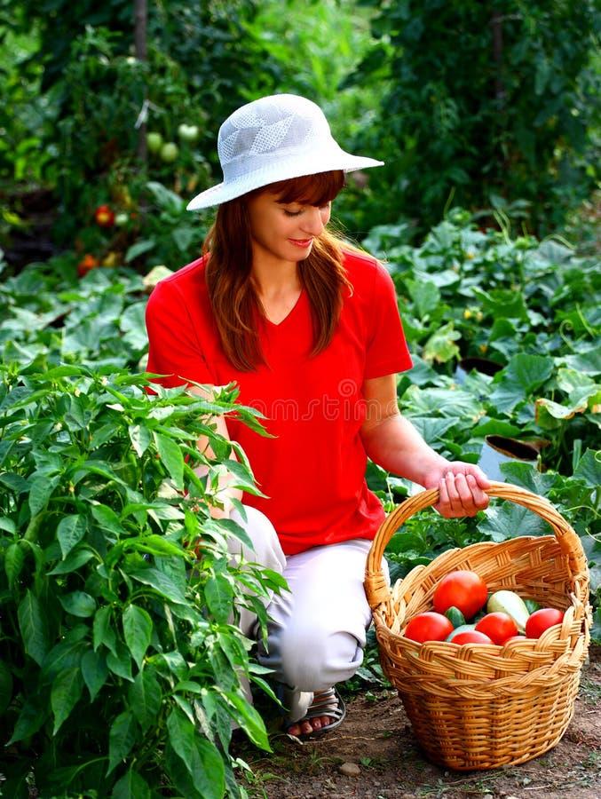 Verdure di raccolto della donna fotografia stock