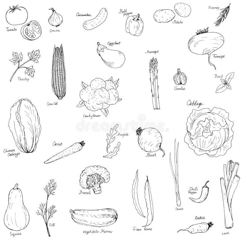 Verdure disegnate a mano illustrazione di stock