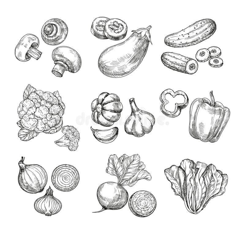 Verdure disegnate a mano Cavolfiore del giardino, pepe e melanzana, funghi prataioli Prodotti freschi del vegano Verdura di schiz illustrazione vettoriale