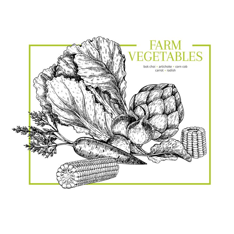 Verdure disegnate a mano dell'azienda agricola Cavolo cinese, carciofo, pannocchia di granturco, carota, ravanello Illustrazione  royalty illustrazione gratis