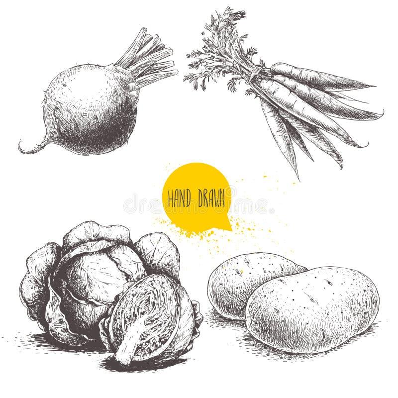 Verdure disegnate a mano di stile di schizzo messe Cavoli, radice della barbabietola con le foglie, patate e mazzo di carote illustrazione di stock
