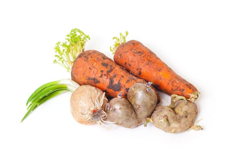 Verdure germogliate su fondo bianco immagine stock