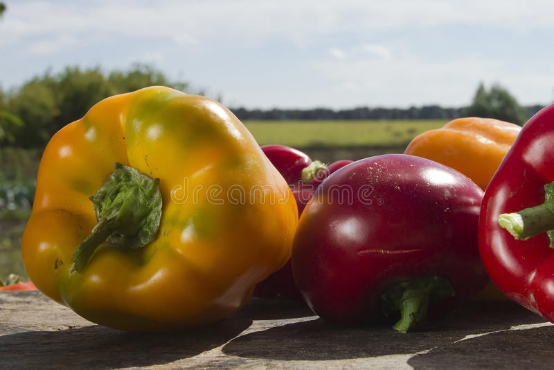 Verdure mature fresche immagini stock libere da diritti