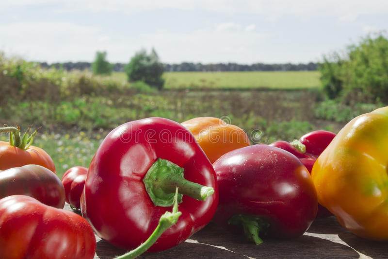 Verdure mature fresche fotografia stock libera da diritti