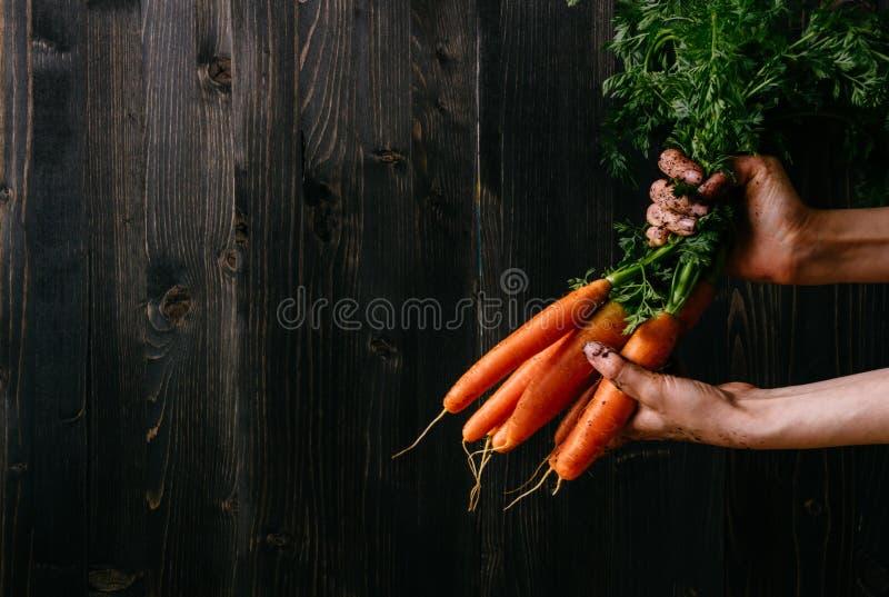 Verdure organiche Mani che tengono le carote fresche Fondo di legno nero con lo spazio della copia immagini stock libere da diritti