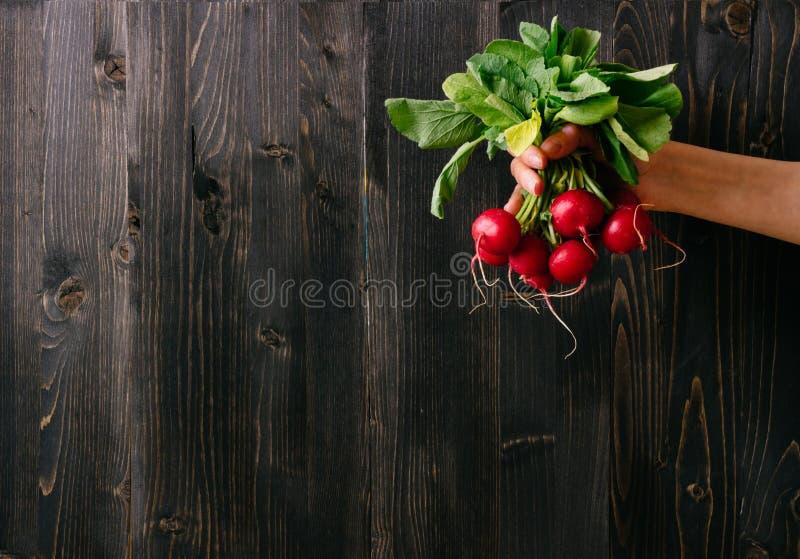 Verdure organiche Mani che tengono ravanello fresco Fondo di legno nero con lo spazio della copia immagine stock