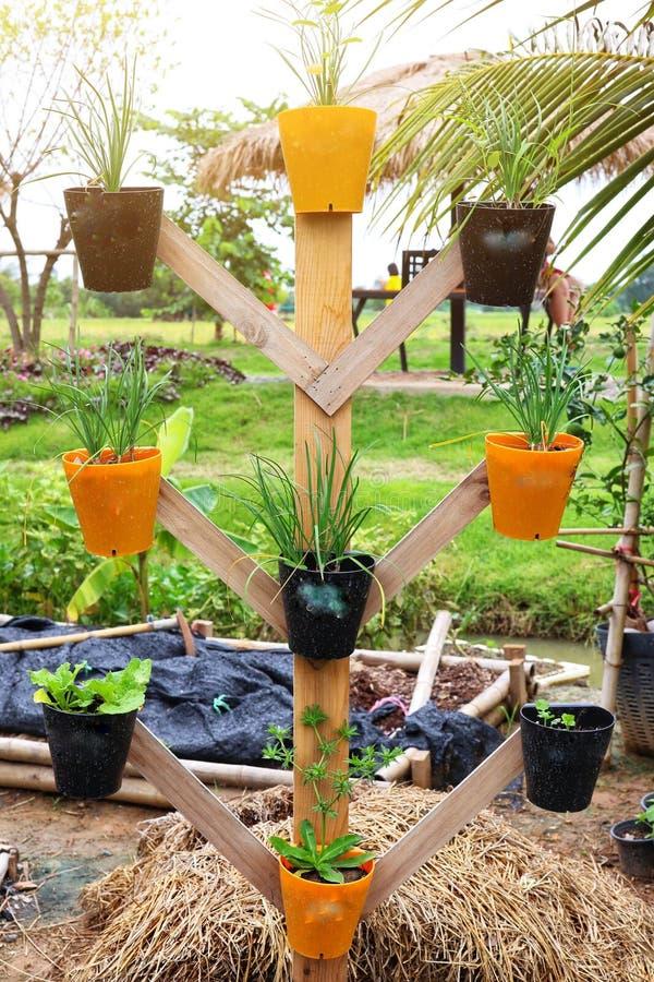 Verdure verdi fresche, diagramma di verdure in vasi agricoli nel giardino, idee organiche di orticoltura per salute fotografia stock