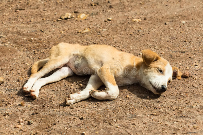 Verdwaald hondpuppy royalty-vrije stock fotografie