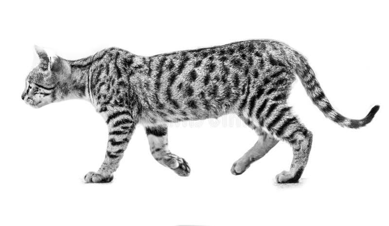 Verdwaald katje stock foto