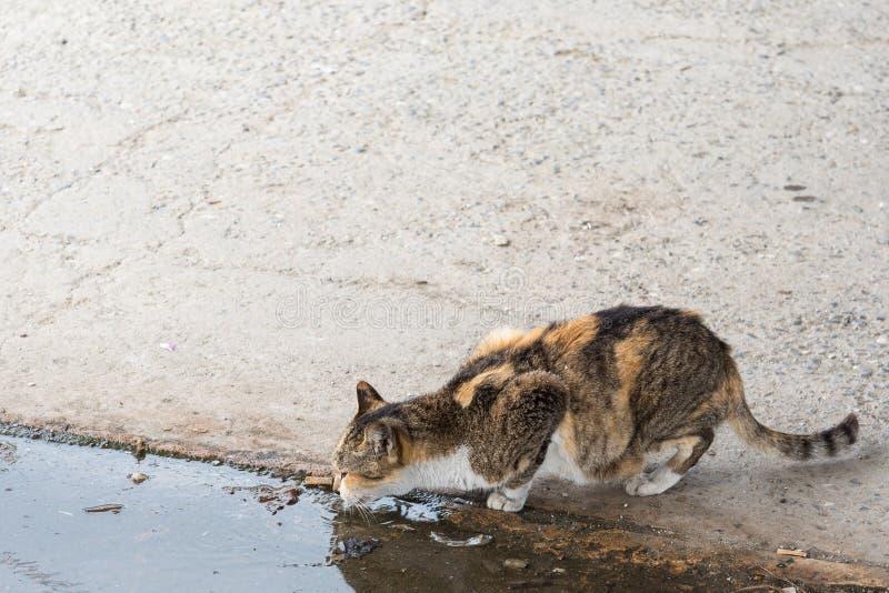 Verdwaald katten drinkwater op de straat stock foto's