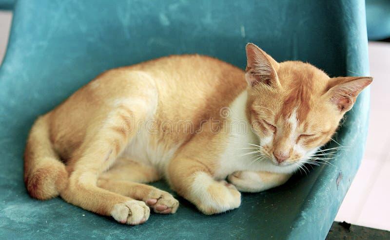 Verdwaalde Cat Resting royalty-vrije stock afbeelding
