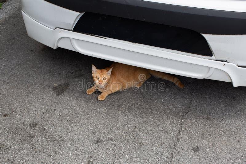 Verdwaalde gember gekleurde gestreepte katkat onderaan een auto royalty-vrije stock fotografie