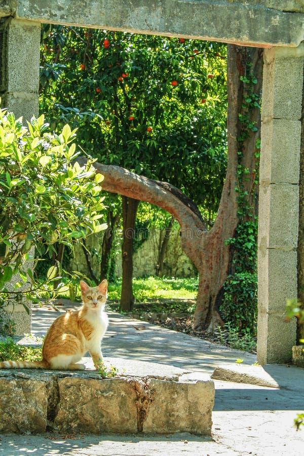 Verdwaalde gemberkat in de oude stad van Kotor, Montenegro, tijdens een zonnige die middag, door de steenmuren en de groene bomen royalty-vrije stock fotografie