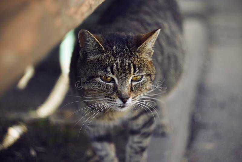 Verdwaalde gestreepte kat die zich op de bestrating bevinden stock foto