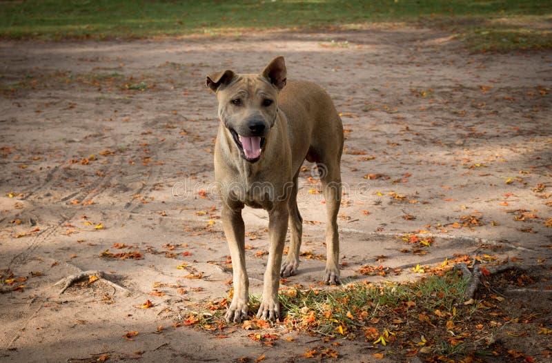 Verdwaalde hond royalty-vrije stock afbeelding