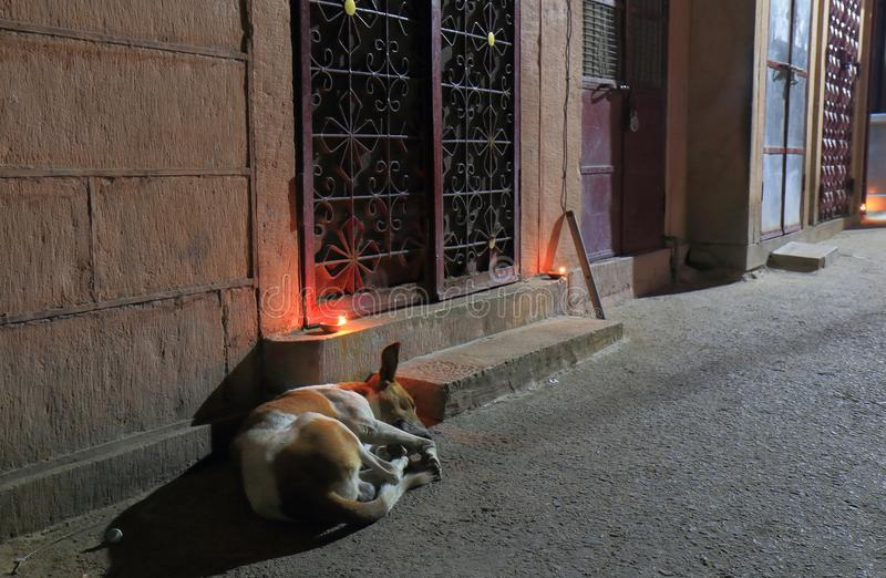 Verdwaalde hond Jodhpur India stock foto's
