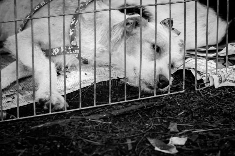 Verdwaalde hond in kooi royalty-vrije stock afbeeldingen
