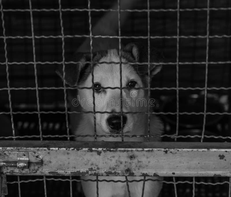Verdwaalde hond in kooi stock fotografie