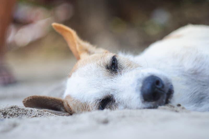 Verdwaalde hond met slaperig gezicht die op zandstrand liggen stock fotografie